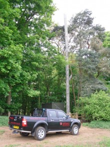 Pickup truck parked in a forest